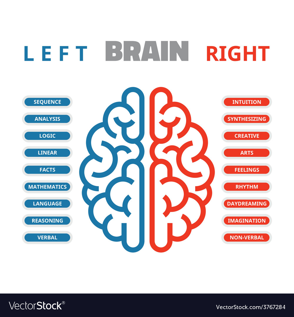 Left and right human brain vector | Price: 1 Credit (USD $1)