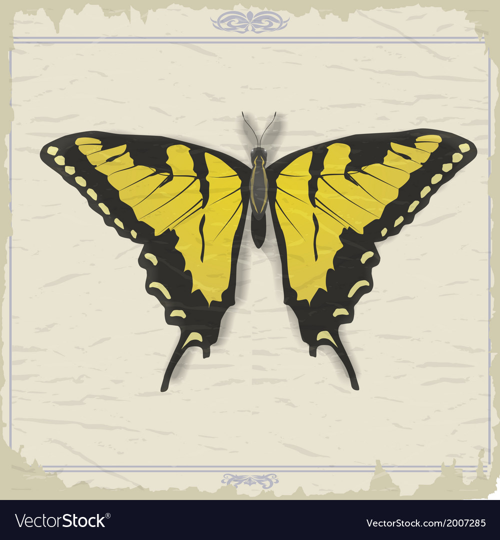 Vintage postcard with image swallowtail vector | Price: 1 Credit (USD $1)