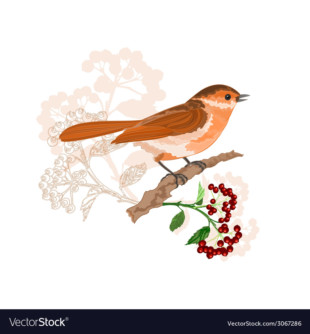 Bird on a branch with berries nature background vector | Price: 1 Credit (USD $1)