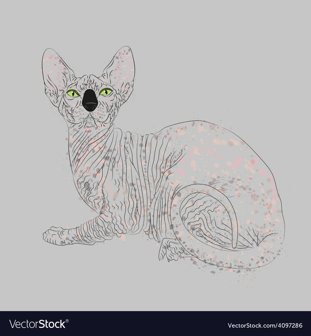 Sphynx cat entirely vector | Price: 1 Credit (USD $1)