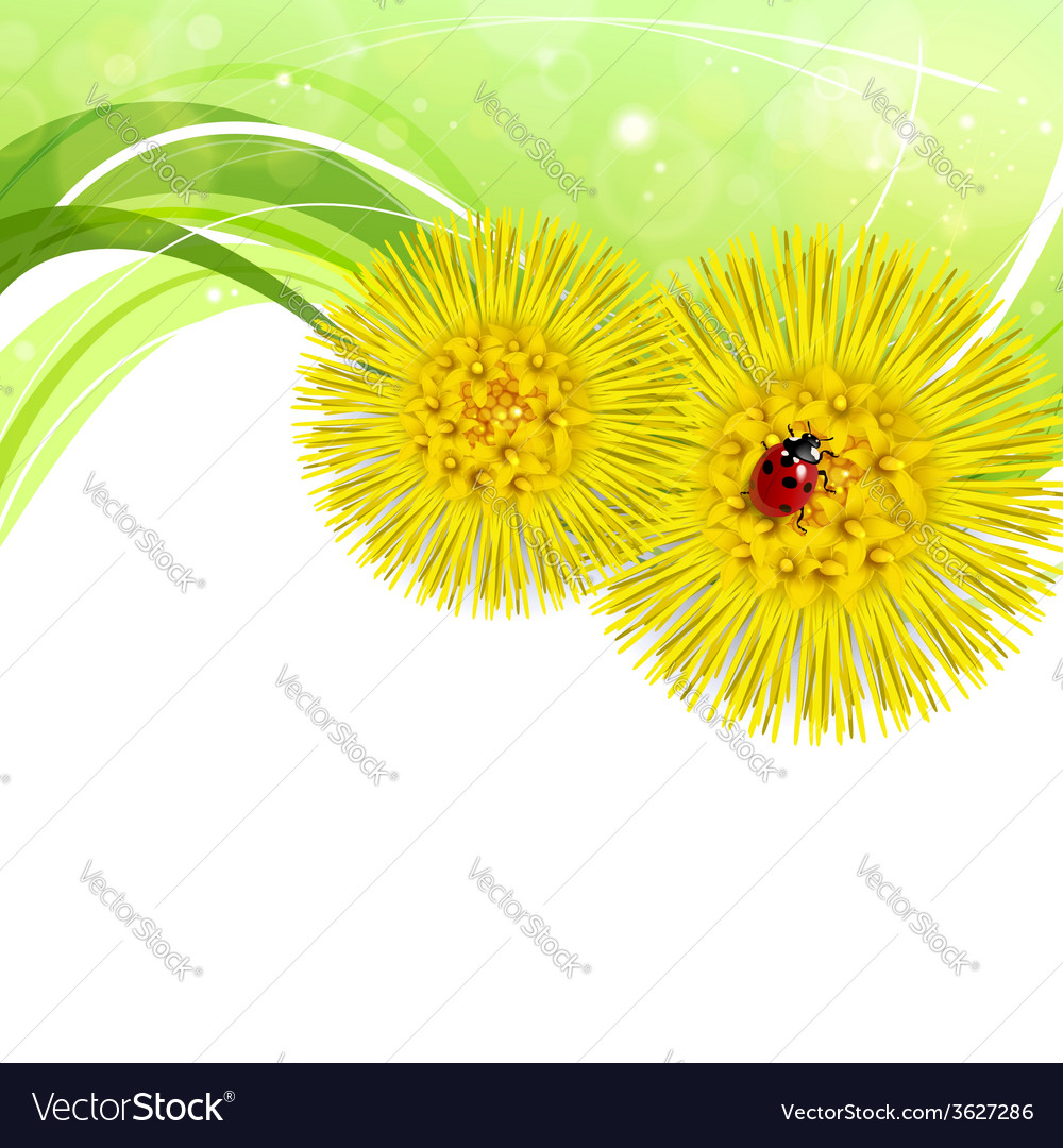Spring floral background with coltsfoot vector | Price: 1 Credit (USD $1)