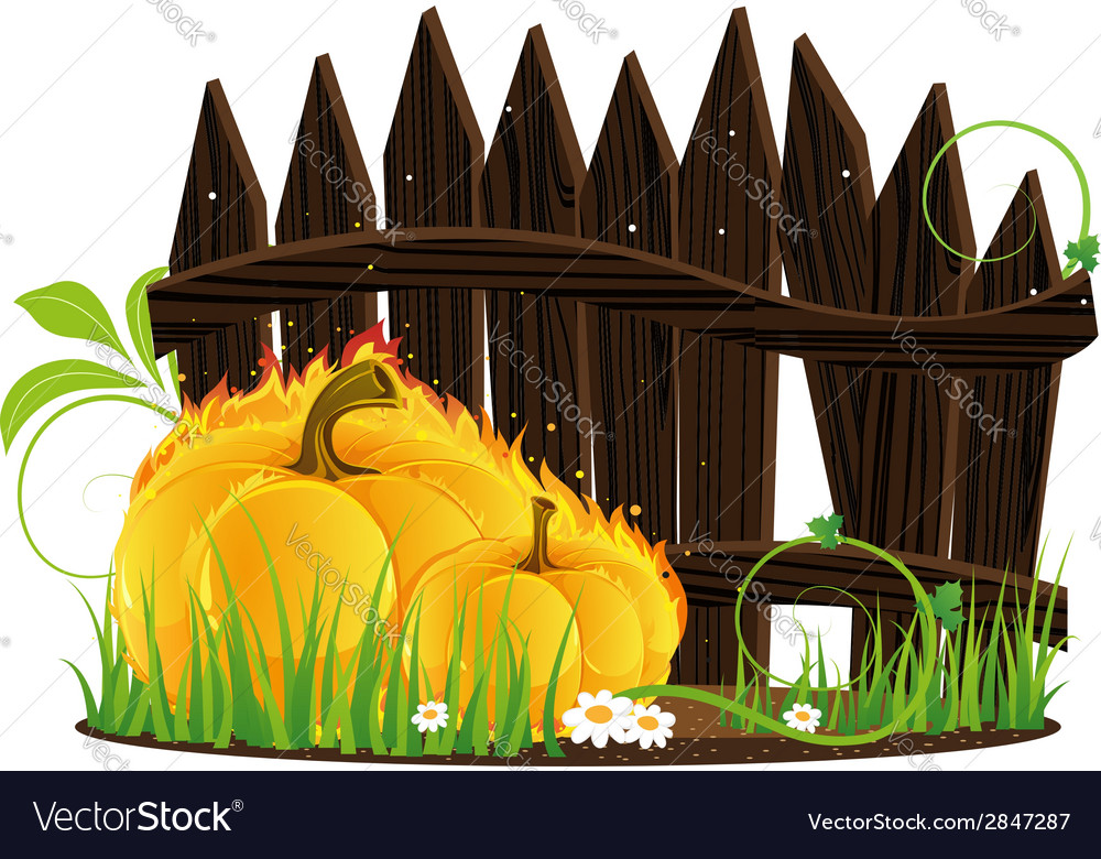 Burning pumpkins against a wooden fence vector | Price: 1 Credit (USD $1)