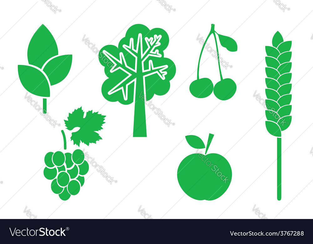 Green elements of nature - set vector | Price: 1 Credit (USD $1)