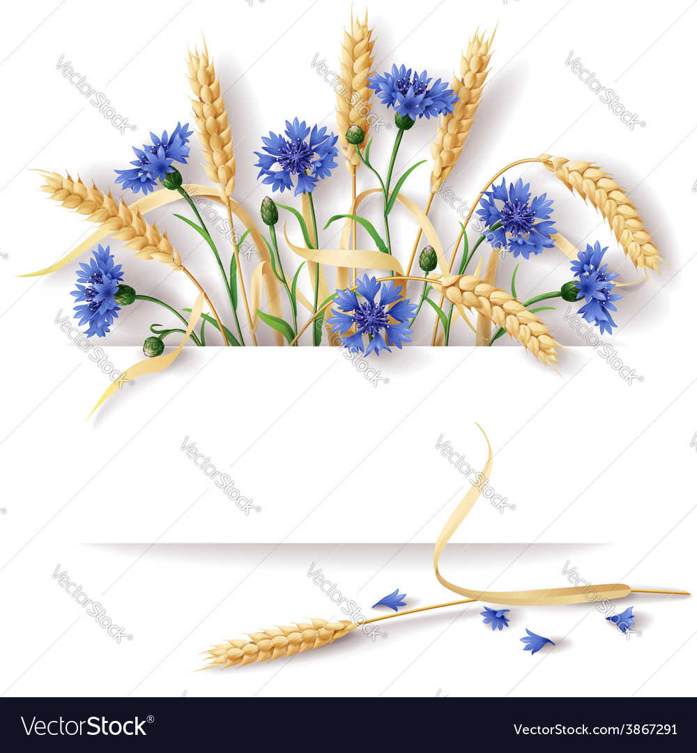 Cornflower and ears banner vector | Price: 1 Credit (USD $1)