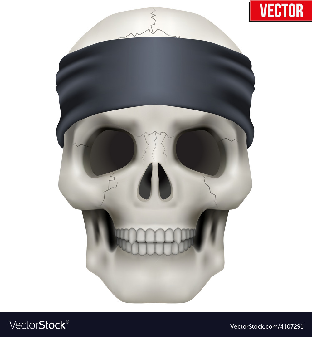 Human skull with gangster bandana on head vector | Price: 3 Credit (USD $3)