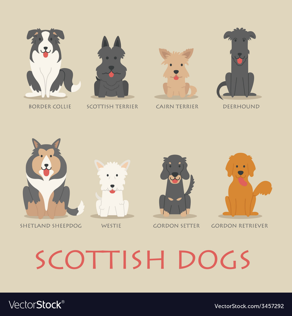 Set of scottish dogs vector | Price: 1 Credit (USD $1)