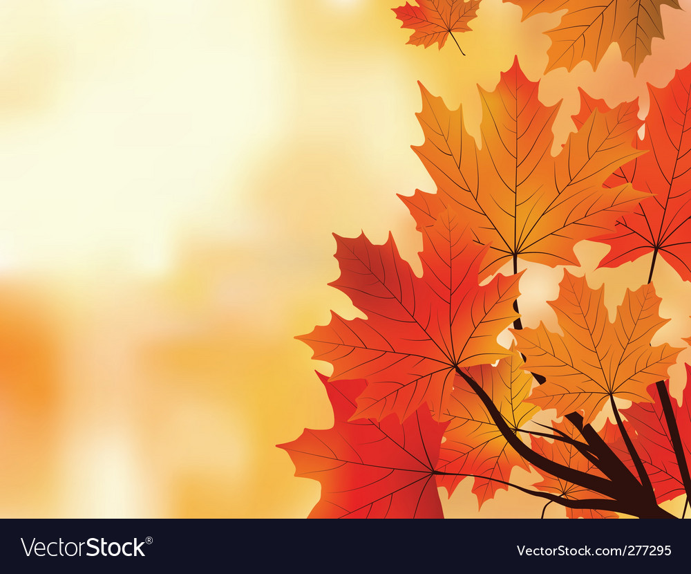 Maple tree leaves vector | Price: 1 Credit (USD $1)