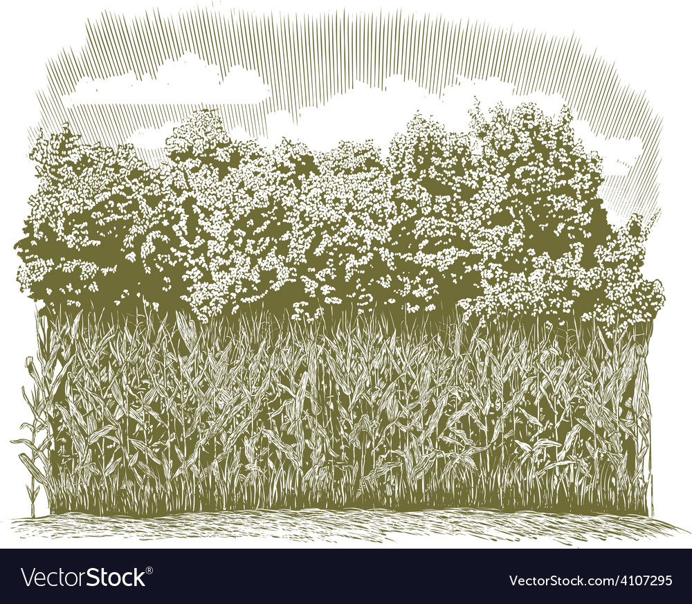 Woodcut corn plants vector | Price: 1 Credit (USD $1)