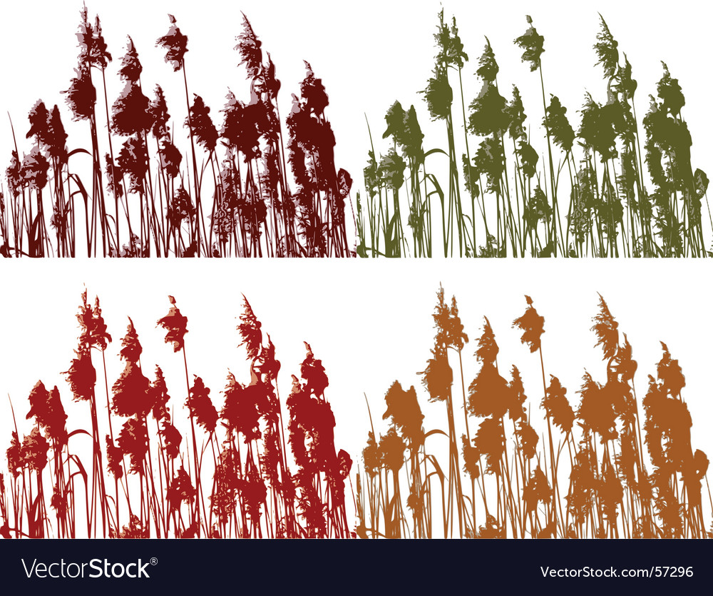 Reeds vector | Price: 1 Credit (USD $1)