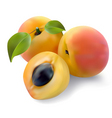 Apricot with leaves vector