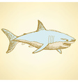 Sketch scary shark in vintage style vector