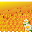 Honey and honeycomb background vector