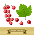 Set of various stylized red currants vector