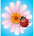 Flower and ladybird vector