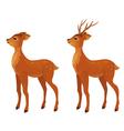 Young deer vector