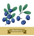 Set of various stylized blueberries vector