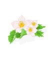Flowers strawberries with leaves vector
