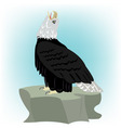 Bird eagle on stone vector