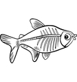 Xrayfish for coloring vector