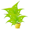 Green flower in a yellow flower pot illustration v vector