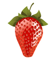 Isolated red strawberry vector