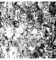 Bark of birch in the cracks texture vector