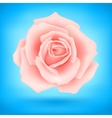 Pink rose vector