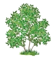 Lilac tree and green grass vector