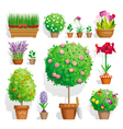 Pot plants set vector