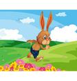 Rabbit in field vector