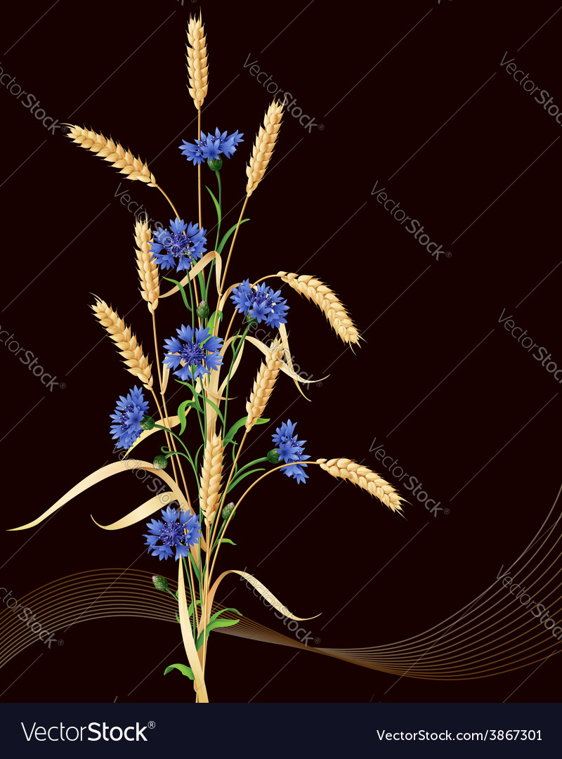 Cornflowers and wheat ears on black vector | Price: 1 Credit (USD $1)