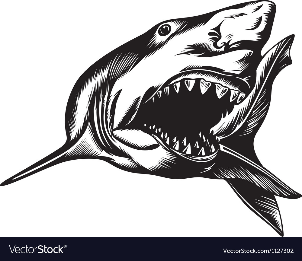 Big shark vector | Price: 1 Credit (USD $1)