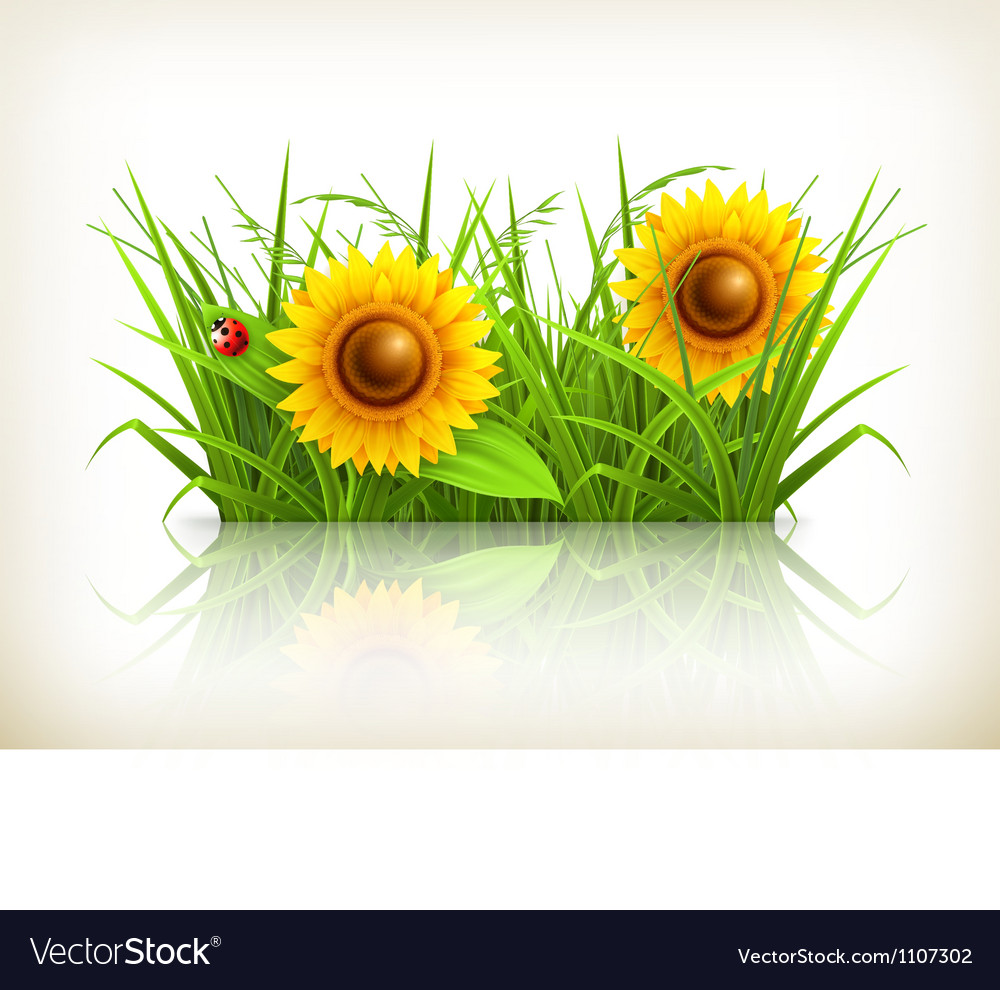 Sunflowers in grass vector | Price: 3 Credit (USD $3)
