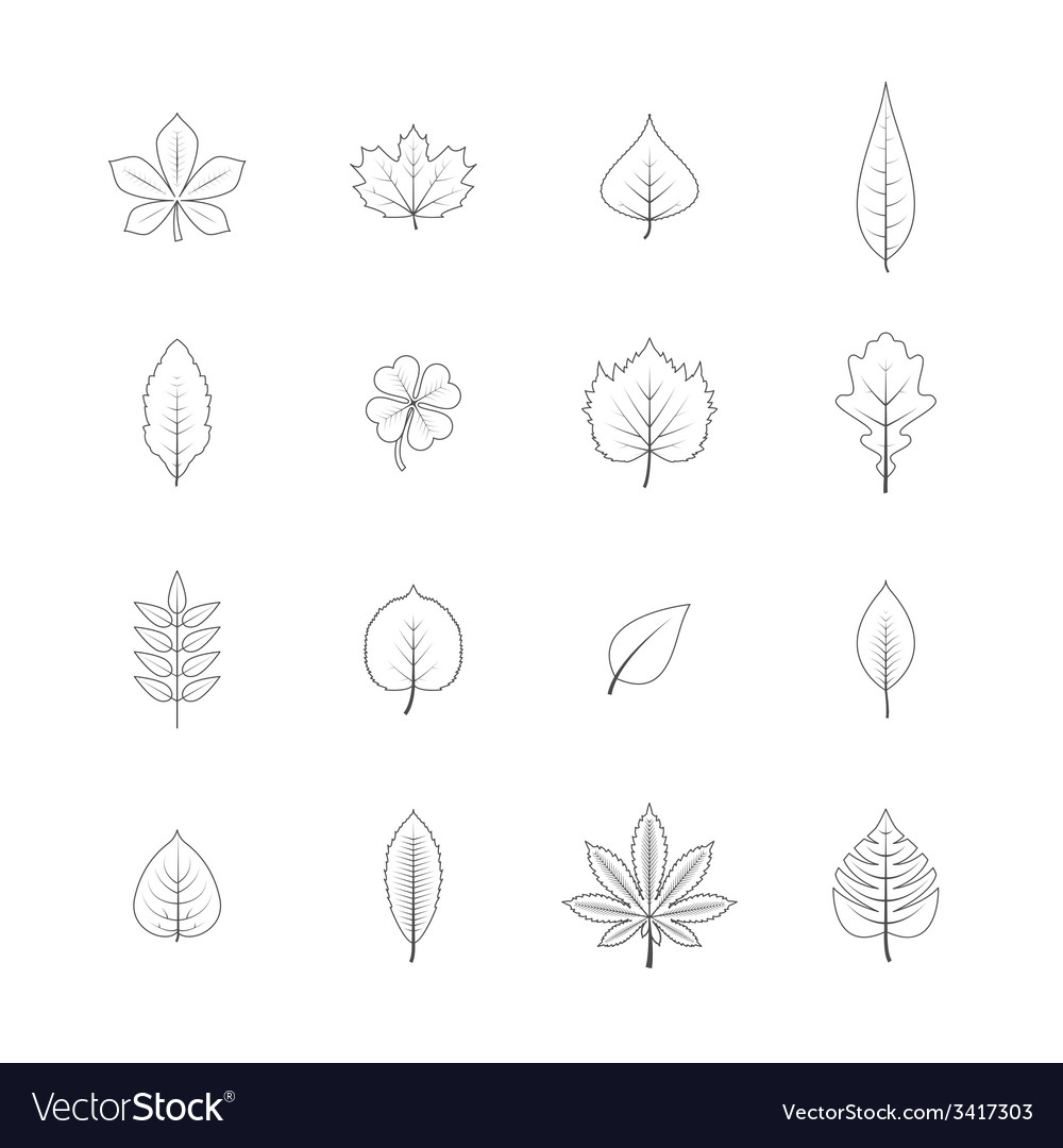 Plant leaves line icons set vector | Price: 1 Credit (USD $1)