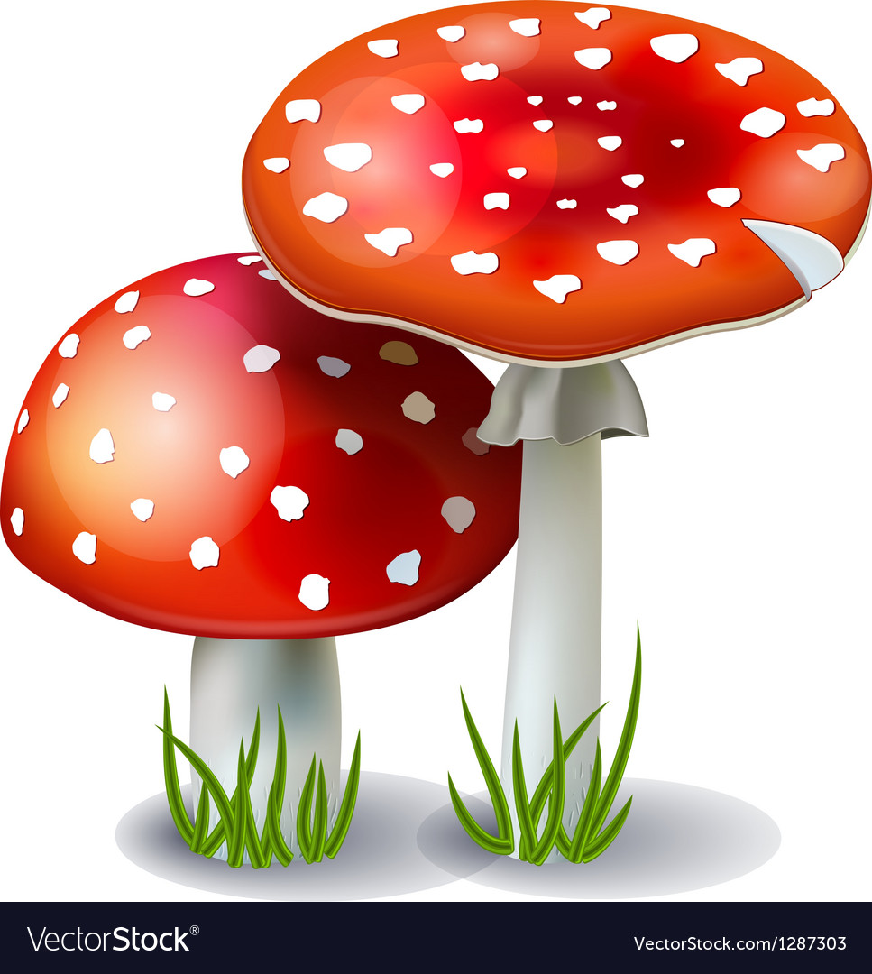 Red mushroom amanita vector | Price: 3 Credit (USD $3)