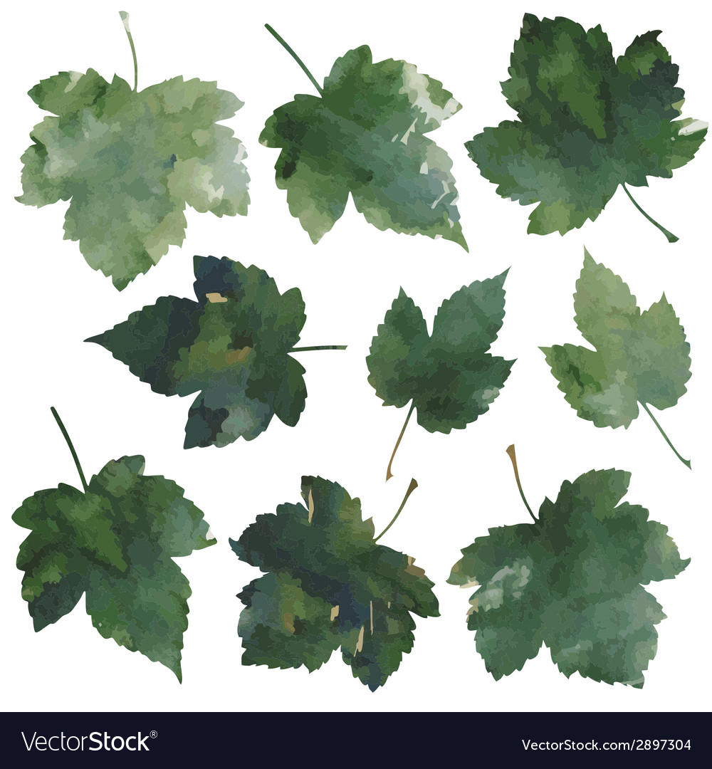 Currant leaves vector | Price: 1 Credit (USD $1)