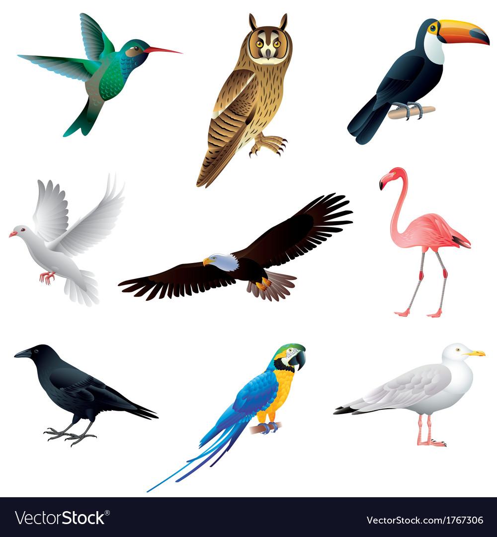 Birds set vector | Price: 1 Credit (USD $1)