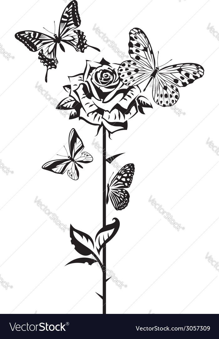 Butterflies and rose vector | Price: 1 Credit (USD $1)
