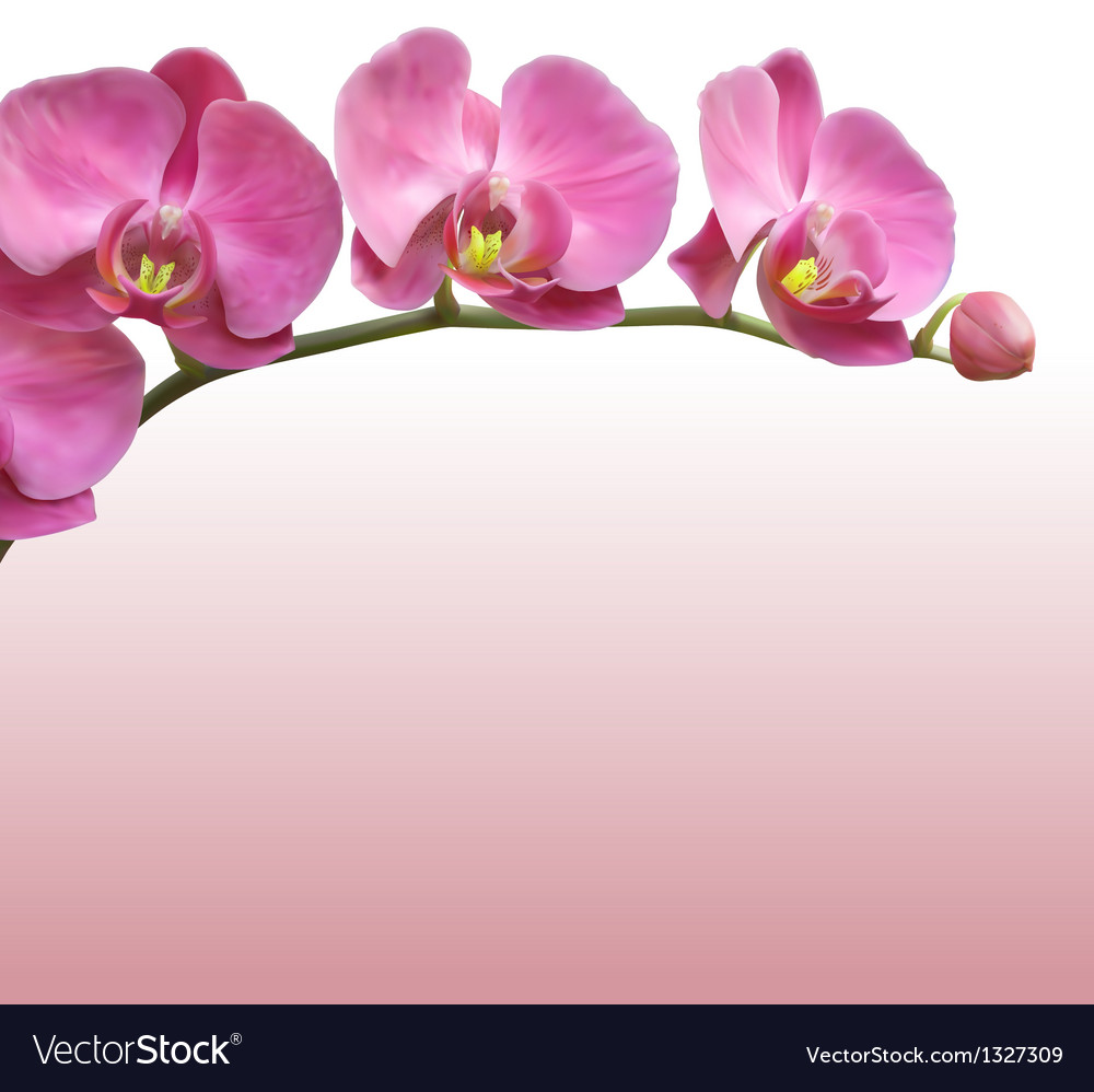 Orchid flower background vector | Price: 1 Credit (USD $1)