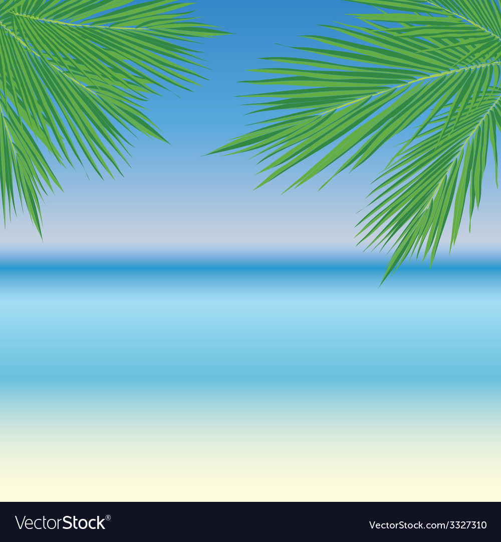 Palmleaves11 vector | Price: 1 Credit (USD $1)
