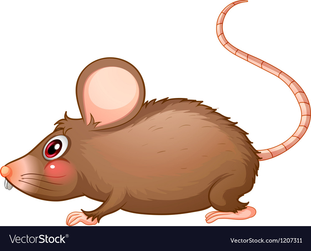 A rat with a long tail vector | Price: 1 Credit (USD $1)