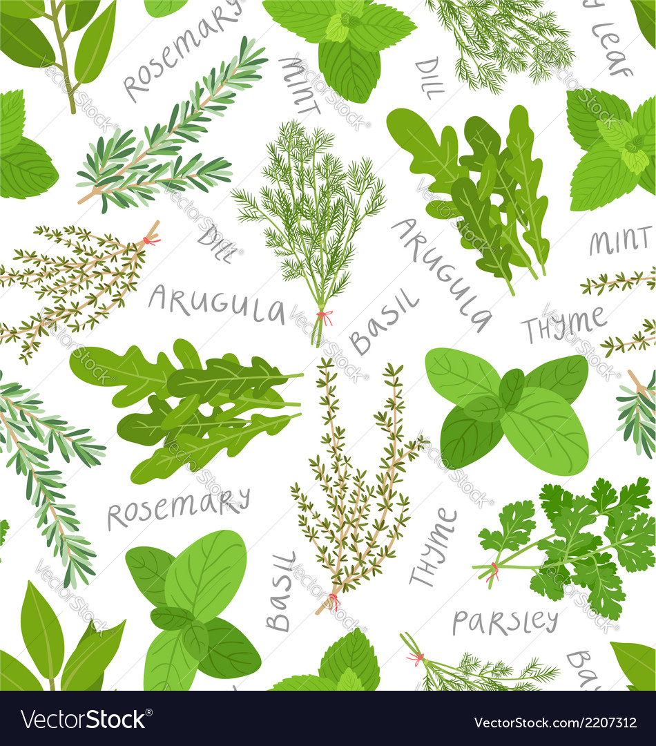 Herbs pattern on white vector | Price: 1 Credit (USD $1)