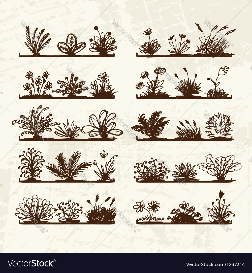 Sketch of plants on shelves for your design vector | Price: 1 Credit (USD $1)