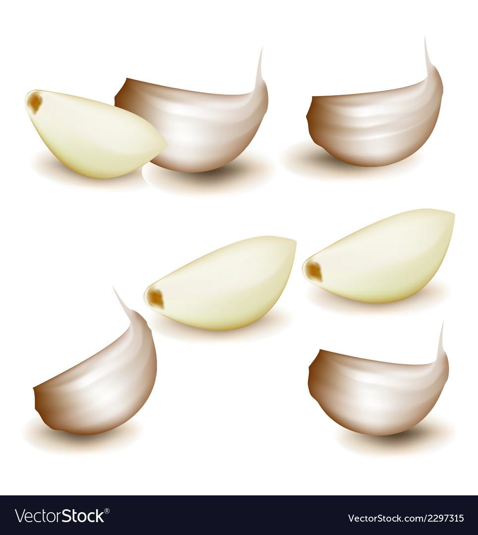 Cloves of garlic vector | Price: 1 Credit (USD $1)