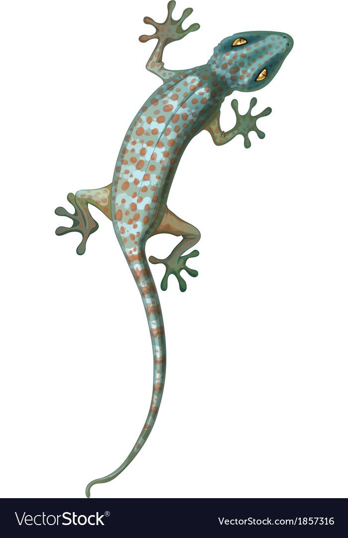 Tokay gecko vector | Price: 1 Credit (USD $1)
