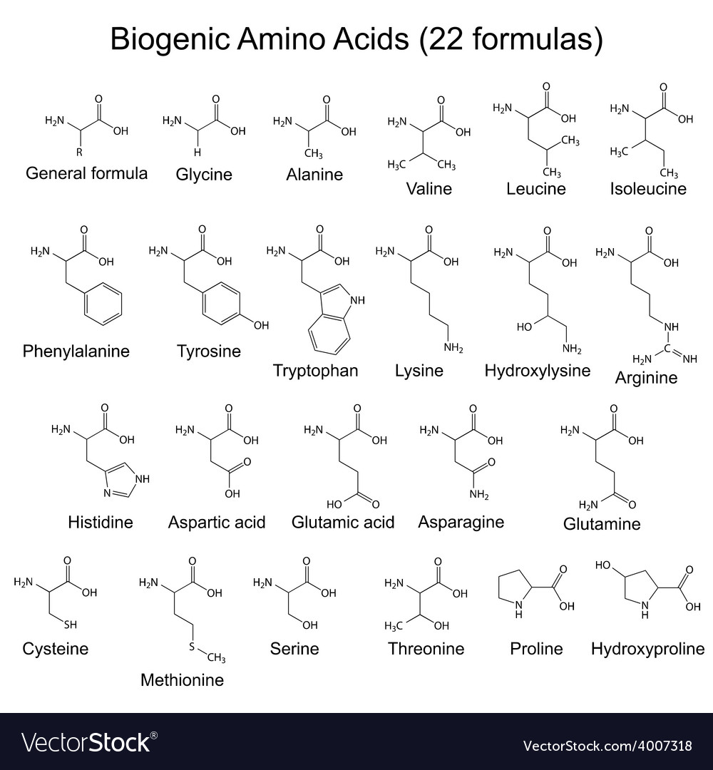 Twenty two bigenic amino acids vector | Price: 1 Credit (USD $1)