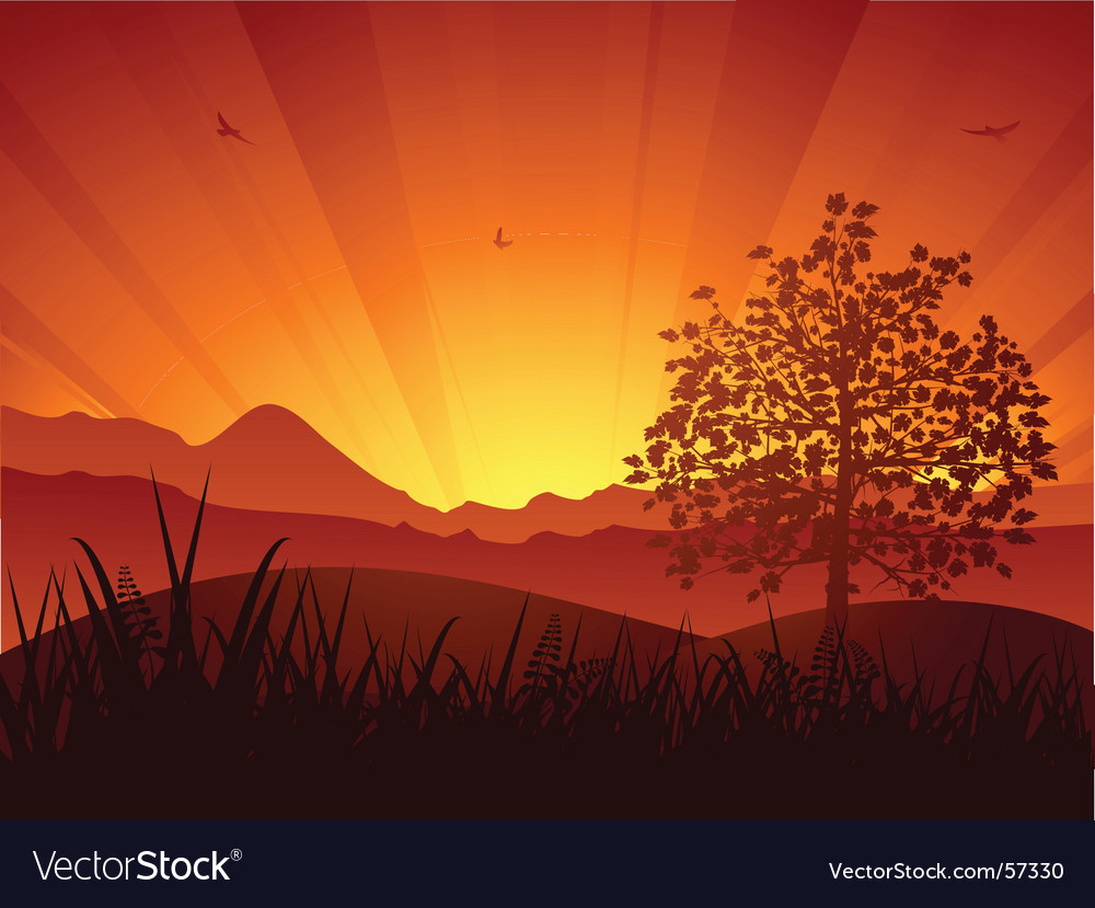 Summer landscape sunset and tree vector | Price: 1 Credit (USD $1)