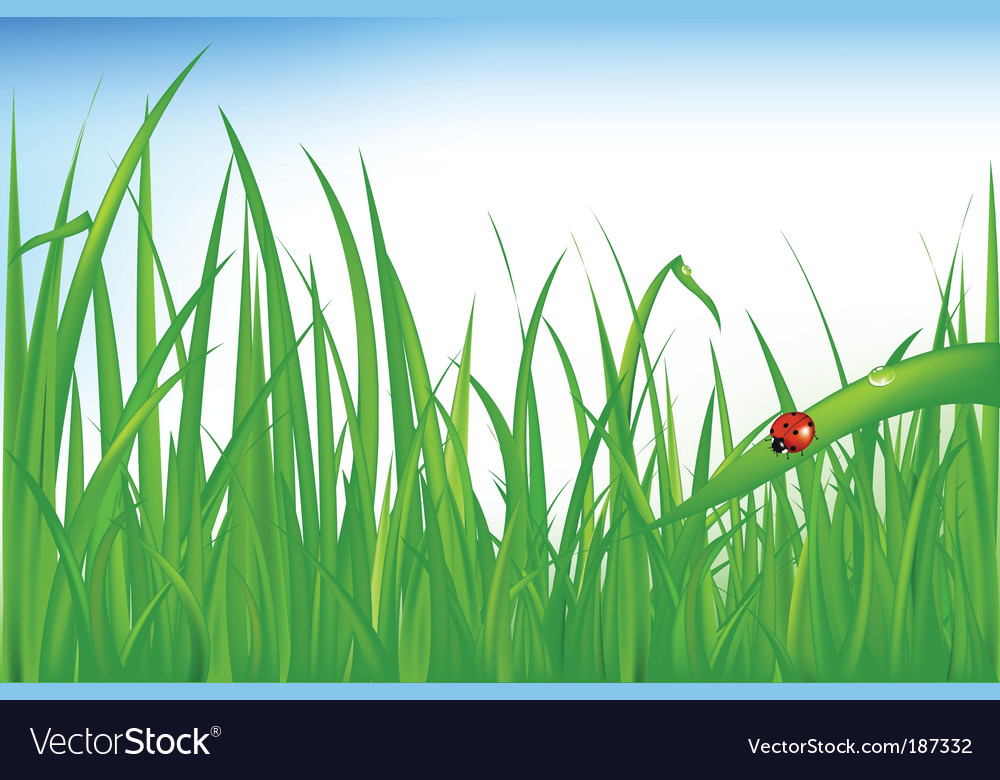 Grass with ladybird vector | Price: 1 Credit (USD $1)