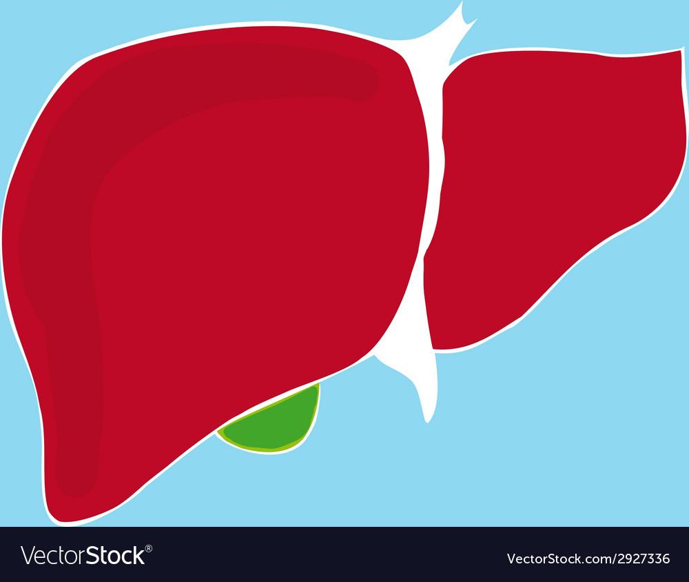 Human liver vector   Price: 1 Credit (USD $1)