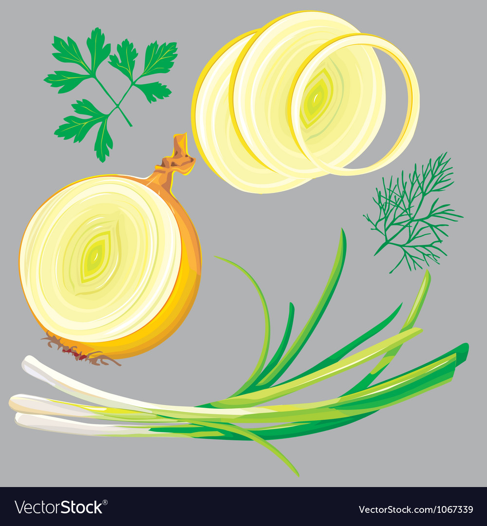 Spring onion parsley dill greens vector | Price: 1 Credit (USD $1)
